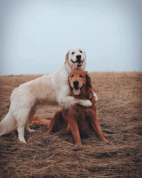 watson and kiko dogs instagram